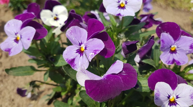 Virágültetés a Föld napja alkalmából
